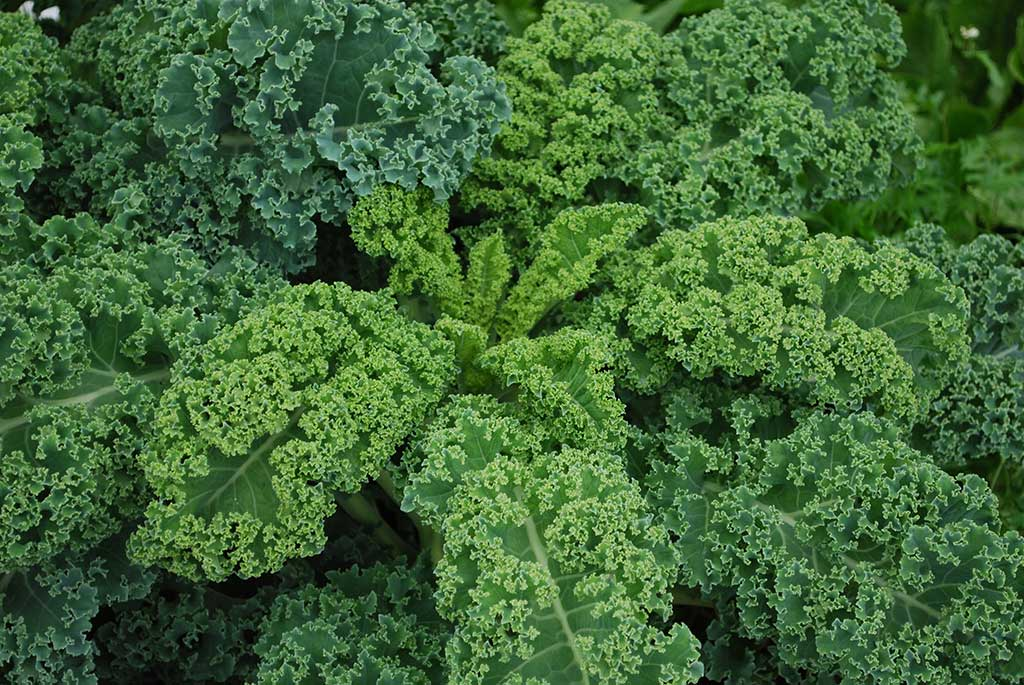 Kale,