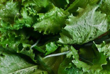Fresh new trend mirogreens and leaf greens