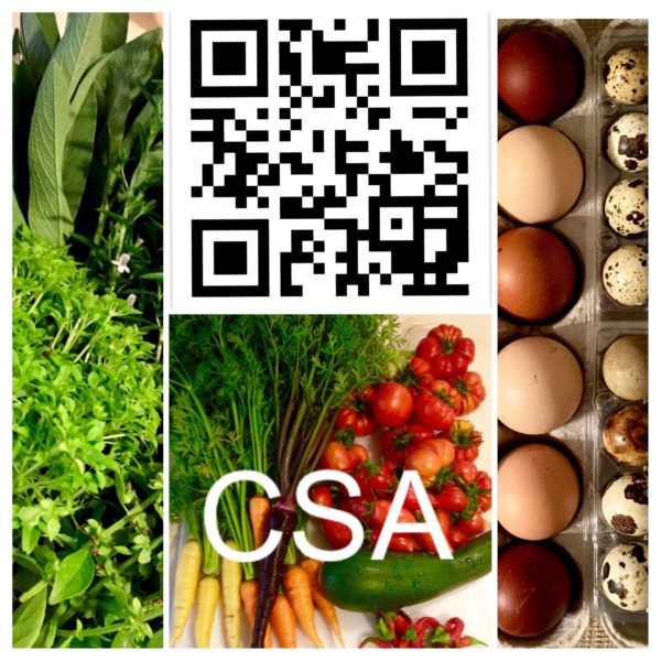 CSA shares available