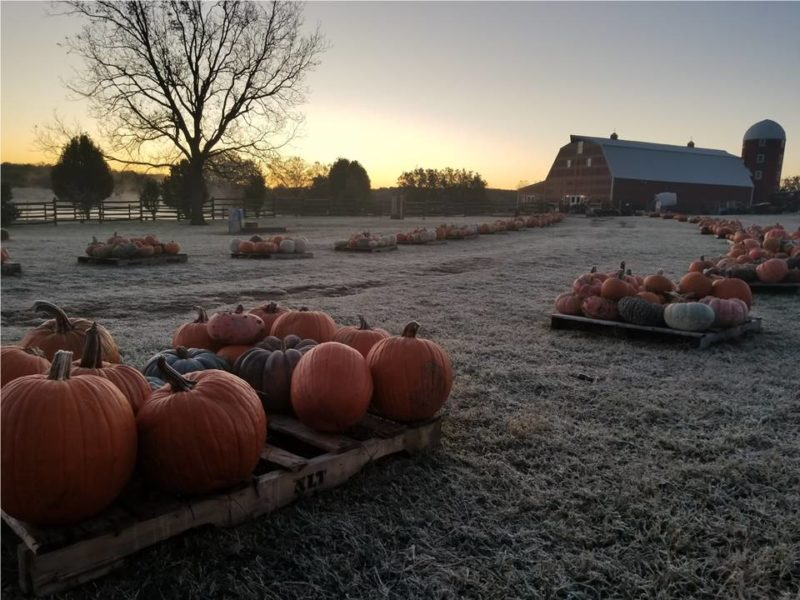 Pumpkin Festival at Shepherd's Cross