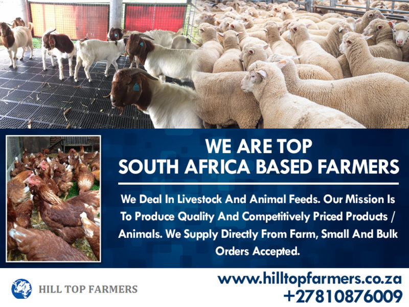 We Supply Goats, Sheep, Cattle, Calves, Chickens, Lurcene Alfalfa Hay, Ostrich Chicks and Many More