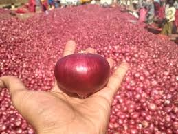 A Grade – Onions, Gingers, Garlics & Coconuts (WholeSale and Retail Business)