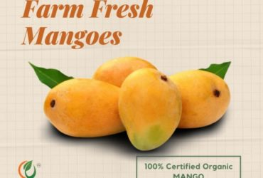 Buy Farm Fresh Mangoes Online
