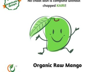 Buy Farm Fresh Organic Raw Mango Kairi Online