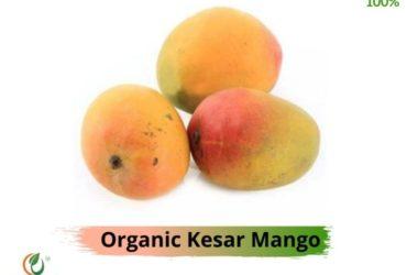 Buy Kesar Amba Online|Organic Kesar Mango