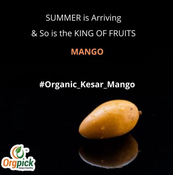 Organic Kesar Mango Online|Gir Kesar Amba