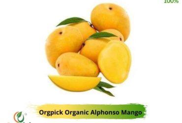 Buy Mango Online in Bavdhan, Pune