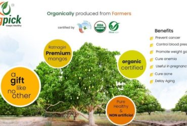 Buy Natural Mangoes Online in Pune|100% Organic