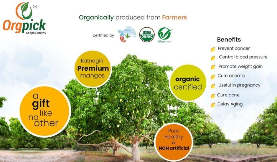 Buy Natural Mangoes Online in Pune|100% Organic