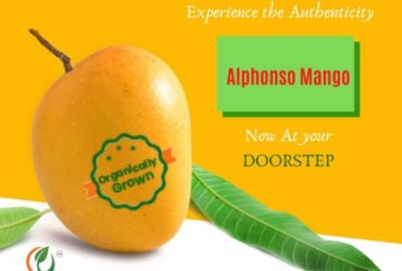 Order Organic Mangoes Online|Organically Grown Alphonso