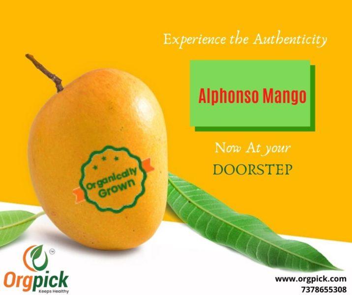 Order Organic Mangoes Online|Organically Grown Alphonso