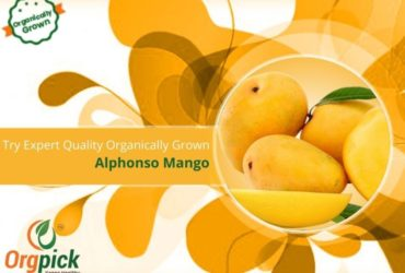 Shop Organically Grown Alphonso Mangoes Online in Pune