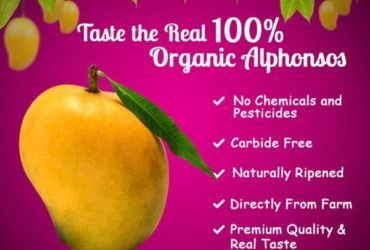 Buy 100% Organic Alphonso Mangoes
