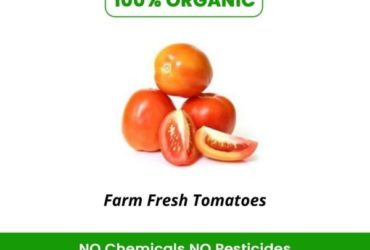 Buy the freshly picked Organic tomatoes online