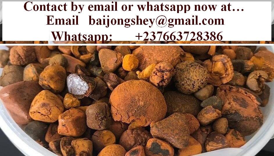 Ox Cow Gallstones in great quantity for sale.