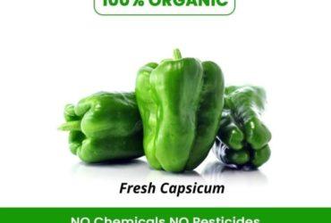 Buy Organic Green Capsicum Online