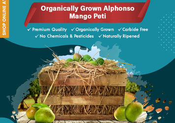 Buy Organically Grown Alphonso Mango peti online