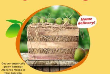 Buy Ratnagiri Hapus Mango Peti Online in Pune