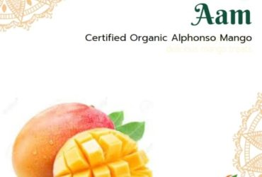 Certified Organic Alphonso Mangoes