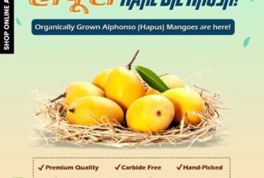 Ratnagiri And Devgad Hapus Mangoes Online