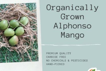 Organically Grown Alphonso Mango Online