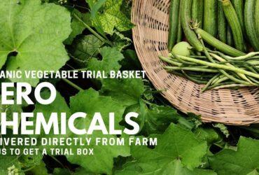 ResponsiblyGrown:  Buy Organic Vegetables Online