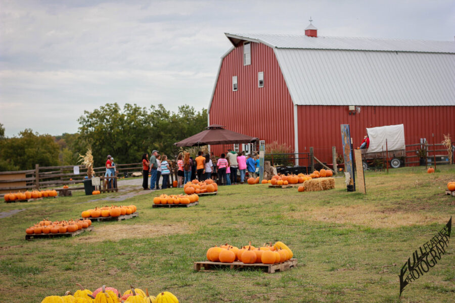 Pumpkin Festival at Shepherd's Cross